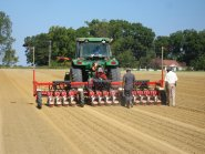 Seed Drill sowing Vidalia Onion Seeds